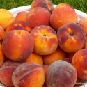 Peach Smoothie to Strengthen Your Bones
